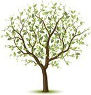 Tree,Growth,Tree Trunk,Leaf,Summer,Ilustration,Single Object,Computer Graphic,Wood - Material,Green Color,Vector,Deciduous Tree,Bark,Remote,Color Image,foliagé,Branch,Twig,Plant,Nature,Isolated Objects,Nature,Illustrations And Vector Art,Stem