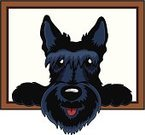 Dog,Scottish Terrier,Terrier,Black Color,Vector,Picture Frame,Peeking,Pets,Cute,Pampered Pets,Animal,Animal Tongue,Panting,Small,Dogs,Animals And Pets,Looking,One Animal