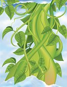 Beanstalk,Vine,Bean,Stem,Growth,Leaf,Green Color,Cultivated,Ilustration,Sky,Cloud - Sky,Vector,Cloudscape,Illustrations And Vector Art,Nature,Plants,Concepts And Ideas,gradient mesh,Tall,Vertical