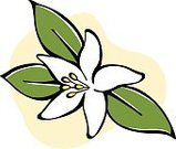 Flower,Single Flower,White,Cartoon,Leaf,Nature,Flowers,Green Color,Ilustration,Vector,No People,Stamen,Yellow