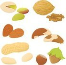 Almond,Nut - Food,Peanut,Walnut,Seed,Pistachio,Hazelnut,Vector,Nutshell,Ilustration,Brazil Nut,Food,Clip Art,Fruit,Healthy Eating,Raw Food,Green Color,Set,Brown,Food And Drink,Raw Food,Ingredient,Cob Nut,Fruits And Vegetables,Groceries,Collection