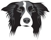 Dog,Border Collie,Collie,Vector,Puppy,Sheepdog,Animal Head,Pets,Ilustration,Animal,Shaggy,Mammal,Dogs,Illustrations And Vector Art,Animals And Pets,Domestic Animals