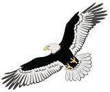 Eagle - Bird,Flying,Bird,Vector,Wing,Animals Hunting,Ilustration,Bird of Prey,Outline,Carnivore,Computer Graphic,Birds,Illustrations And Vector Art,Wildlife,Animals In The Wild,Animals And Pets