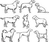 Dog,Silhouette,Golden Retriever,Labrador Retriever,Ilustration,Weimaraner,Drawing - Art Product,French Bulldog,Vector,Line Art,Dachshund,Spaniel,Beagle,Side View,Sitting,Rottweiler,Pencil Drawing,Canine,Standing,Group Of Animals,Collection,Pen And Ink