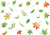 Leaf,Falling,Autumn,Green Color,Oak Leaf,Icon Set,Willow Leaf,Vector,Variation,Maple Leaf,Chestnut Tree,Plant,Set,Ilustration,Red,Botany,Freshness,Nature,Yellow,Season,Summer,Environment,Collection,Shape,Isolated On White,foliagé