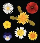 Flower,Daisy,Dandelion,Wildflower,Poppy,Yellow,Gerbera Daisy,Chamomile Plant,Petal,Isolated,White,Symmetry,Directly Above,Orange Color,Red,Multi Colored,Purple,Collection,Crown Daisy,Nature,sow thistle,Large Group of Objects,Nature,Plants,Flowers,Vibrant Color