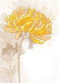 Chrysanthemum,Watercolor Painting,Flower,Single Flower,Outline,Wedding Invitation,Single Object,Blossom,Corner,Frame,Drawing - Art Product,Engraved Image,Botany,Yellow,Vector,Plant,Sketch,Simplicity,Summer,Leaf,Springtime,Ornate,Pencil Drawing,Flower Head,Ilustration,Nature,Textured,Petal,Line Art,flayer,Grunge,Nature,Vector Backgrounds,Beauty In Nature,Vector Florals,Close-up,Illustrations And Vector Art,Flowers,Classic,Creativity,Vertical,Bright,Contour Drawing