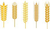 Wheat,Barley,Cereal Plant,Bread,Symbol,Seed,Farm,Isolated,Silhouette,Rye,Crop,Sign,Stem,Harvesting,Food,Ilustration,Autumn,Design,Agriculture,Rural Scene,Full Length,Nature,Corn - Crop,Branch,Gold Colored,Leaf,Yellow,Vector,Part Of,Growth,Decoration,Plant,Floral Pattern,Wreath,Ornate,Insignia,Ripe,Single Object,Shape,Design Element