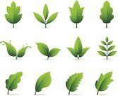 Leaf,Plant,Symbol,Green Color,Nature,Computer Graphic,Icon Set,Branch,Set,Surreal,Collection,Bizarre,Vector Icons,Nature Symbols/Metaphors,Nature,Illustrations And Vector Art,Plants