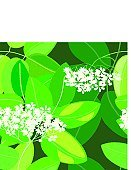 Elder Tree,Flower,Seamless,Leaf,Silhouette,Environment,Botany,Pattern,Elegance,Pith,Drawing - Art Product,Nature,Illustrations And Vector Art,Nature,Fragility,Vector,Design,Computer Graphic,Floral Pattern,Plant,Vector Backgrounds,Petal,Repetition,Ornamental Garden,Tracery,Design Element,Nature Backgrounds,Vector Florals