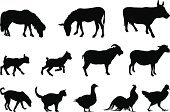 Silhouette,Sheep,Goat,Farm,Domestic Cat,Dog,Animal,Donkey,Goose,Chicken - Bird,Cow,Horse,Vector,roster,Cockerel,Rooster,Farm Animals,Animals And Pets,Illustrations And Vector Art