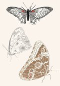 Butterfly - Insect,Sketch,Animals And Pets,Insects,Hand-drawn,Wing,Vector,Ilustration,Insect