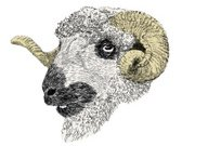 Sheep,Ram - Animal,Wool,Horned,Farm Animals,Animals And Pets,Hand-drawn,Sketch