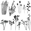 Plant,Silhouette,Grass,Wildflower,Herb,Nature,Vector,Meadow,Drawing - Art Product,Ilustration,Bush,Uncultivated,Black Color,Abstract,White,Growth,Design,Field,Pencil Drawing,Landscape,Design Element,Summer,Isolated,Tracing,Part Of,Season,Outdoors,Vector Florals,Illustrations And Vector Art,Plants,Nature,Vector Backgrounds