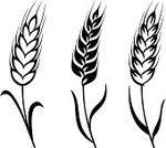 Wheat,Whole Wheat,Cereal Plant,Bread,Wholegrain,Agriculture,Symbol,Stem,Vector,Crop,Computer Icon,Ilustration,Silhouette,Seed,Black Color,Nature,Summer,Decoration,Computer Graphic,Abstract,Ornate,Leaf,Shape,Plant,Simplicity,Variation,Design Element,Isolated,Vector Florals,Vector Ornaments,Illustrations And Vector Art,Set,Part Of,Style,Collection