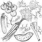 Vegetable,Food,Sketch,Old-fashioned,Drawing - Art Product,Doodle,Ilustration,Carrot,Tomato,Cool,Line Art,Seasoning,Design Element,Groceries,Calligraphy,Scribble,Organic,Sweet Potato,Art,Raw Potato,Leek,Computer Graphic,Zucchini,Backgrounds,Clip Art,Pen And Marker,Healthy Eating,Raw Food,Abstract,Style,Group of Objects,Western Script,Funky,Rough,Design,Snow Pea