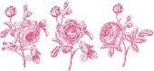 Rose - Flower,Flower,Single Flower,Retro Revival,Old-fashioned,Floral Pattern,Pink Color,Ilustration,Sketch,Engraved Image,Vector,Clip Art,White,Drawing - Art Product,Pencil Drawing,Springtime,Plant,Ornate,Botany,Elegance,Art,Decoration,Summer,Cute,Leaf,Isolated,hand drawn,Illustrations And Vector Art,Nature,Design Element,Three Objects,Painted Image,Gardens,Nature,Flowers