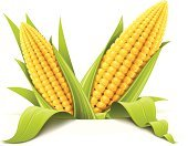 Corn,Corn - Crop,Vegetable,Corn On The Cob,Vector,Cereal Plant,Food,Ilustration,Leaf,Seed,Isolated,Candid,Food And Drink,Healthy Eating,Meal,Freshness,Yellow,Green Color,Single Object,Plant,Illustrations And Vector Art,Isolated Objects,Vegetarian Food,White,Nature,Indigenous Culture,Ingredient,Food And Drink,Floral Pattern