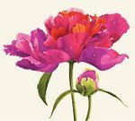 Peony,Flower,Pink Color,Old-fashioned,Floral Pattern,Red,Springtime,Paintings,Botany,Twig,Bud,Romance,Luxury,Green Color,Summer,Nature,Flowers,Nature,Grace,Beauty In Nature,Illustrations And Vector Art,Gardens,Blossoming,Vector Florals,Leaf,Petal,Plant