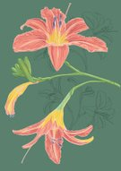 Day Lily,Lily,Flower,Flower Head,Petal,Nature,Flowers,Hand-drawn,Sketch,Plant Pod,Stem,Bud