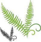 Fern,Silhouette,Leaf,Vector,Plant,Ilustration,Clip Art,Curled Up,Stem,Plants,Vector Icons,Nature,gradient mesh,Curve,Green Color,Illustrations And Vector Art