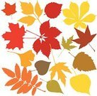 Leaf,Autumn,Falling,Tree,Silhouette,Vector,Floral Pattern,Shape,Backgrounds,Plant,Computer Graphic,Sign,Nature,Design Element,Ilustration,Design,Textured Effect,Branch,Summer,Maple Tree,Chestnut Tree,Green Color,Season,Set,Black Color,Image,Oak Tree,Beauty In Nature,Style