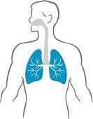 Human Lung,The Human Body,Healthcare And Medicine,Respiratory System,People,Anatomy,Throat,Human Internal Organ,Ilustration,Medicine,Bronchus,Human Trachea,Surgery,Blue,White Background,Gray,Human Vein,Human Artery,Isolated Objects,Medicine And Science,Illustrations And Vector Art,Nasopharynx