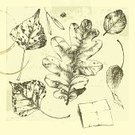 Leaf,Etching,Sketch,Botany,Oak Tree,Tree,Ilustration,Drawing - Art Product,Drawing - Activity,Old,Pencil Drawing,Flower,Group of Objects,Scratched,Engraved Image,Ornate,Lush Foliage,Poplar Tree,Autumn,Nature,Insect,Retro Revival,Fragility,Forest,Old-fashioned,Grunge,herbarium,Vector,Single Object,Seed,Tracing,Cracked,Collection,Season,Illustrations And Vector Art,Fall,coffee stain,Computer Graphic,Incomplete,Part Of,Isolated,Set,Isolated Objects,Nature,Herb,Bush,Ash Tree,Contour Drawing