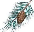 Pine Cone,Pine Tree,Needle,Coniferous Tree,Branch,Leaf,Green Color,Nature,Plants,Decoration,Evergreen Tree,Brown,Environment,Tree