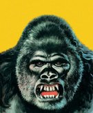 Gorilla,Color Image,Zoo,Animal,Ilustration,Illustration Technique,Animal Mouth,Animal Teeth,Aggression,Colored Background,Animal Themes,Portrait,No People,Vertical,Animal Head,One Animal,Primate,Close-up,Animal Body Part,Yellow Background,Studio Shot,Looking At Camera,Confrontation,Wildlife,Captivity