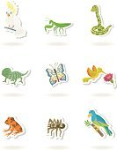 Reptile,Hummingbird,Frog,Cockatoo,Praying Mantis,Chameleon,Tropical Rainforest,Snake,Bird,Insect,Animal,Parrot,Wolf Spider,Tropical Climate,Wild Animals,Birds,Animals And Pets,Spider,Poisonous Organism,Swallowtail Butterfly,Butterfly - Insect