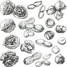 Nut - Food,Peanut,Walnut,Hazelnut,Sketch,Old-fashioned,Drawing - Art Product,Food,Nutshell,Ilustration,Engraved Image,Retro Revival,Hazel Tree,Etching,Tree,Botany,Drawing - Activity,Pencil Drawing,Seed,Vector,Outline,Incomplete,Healthy Lifestyle,Silhouette,Collection,Set,Vitamin Pill,Dieting,Ingredient,Strength,Grunge,Lifestyles,Eating,Harvesting,Isolated,Tracing,Healthy Eating,Single Object,Fruits And Vegetables,Ornate,Illustrations And Vector Art,Contour Drawing,Food And Drink,Vegetarian Food,nutty,Raw Food,Isolated Objects