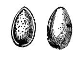 Almond,Almond Tree,Seed,Clip Art,Ilustration,Single Object,Fruit,Freshness,Nut - Food,Isolated,Line Art,Dessert,Raw Food,Healthy Eating,Plant Pod,Peanut Crops,Food And Drink,Almond Fruit,Plant,Greek Cuisine,Sweet Food,Food And Drink Industry,Middle Eastern Food,Isolated On White,White,Ripe,Fruits And Vegetables,Food And Drink,Vegetarian Food,Agriculture,Food,No People,Cooking,Ingredient,Illustrations And Vector Art,Side View,Eating,Organic,Marzipan,Nature,White Background,Vegetable Garden,Farm,Gardening,Peanut