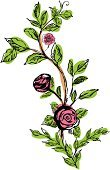 Rose - Flower,Watercolor Painting,Flower,Ornamental Garden,Drawing - Art Product,Floral Pattern,Green Color,Swirl,Scroll,Scroll Shape,Scroll,Color Image,Colors,Design,Leaf,Red,Illustrations And Vector Art,Growth,Ilustration,Vector,Pencil Drawing,Ornate