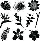 Orchid,Tropical Flower,Single Flower,Flower,Bird of Paradise,Ginger,Passion Flower,Silhouette,Heliconia,Symbol,Computer Icon,Hibiscus,Tropical Rainforest,Anthurium,Clip Art,Stencil,Pincushion Flower,Tropical Climate,Rainforest,Icon Set,Black And White,Set,Plant,Nature,Black Color,Illustrations And Vector Art,Group of Objects,Rainforest Flowers,Nature,Flowers