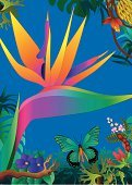Bird of Paradise,Hawaiian Culture,Single Flower,Flower,Tropical Rainforest,Tropical Climate,Butterfly - Insect,Rainforest,Tropical Flower,Vertical,Backgrounds,Vector,Beauty In Nature,Design,Amazon Rainforest,Illustrations And Vector Art,Nature,Flowers,Amazon Jungle,Nature,Ilustration,Multi Colored,Botany,Tropical Butterfly