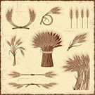 Wheat,Barley,Bundle,Engraved Image,Cereal Plant,Farm,Woodcut,Old-fashioned,Stem,Vector,Frame,Ilustration,Drawing - Art Product,Agriculture,Food,Line Art,Textured,Corn On The Cob,Design Element,Crop,Old,Bunch,Bouquet,Backgrounds,Organic,Plant,Set,Plank,Design,Rye,Wood - Material,Brown,Leaf,Grunge,Grass Family,1940-1980 Retro-Styled Imagery,Print,Computer Graphic,Stipe,Collection,Vegetarian Food,Scratched,Monochrome