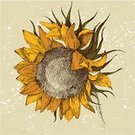 Sunflower,Old-fashioned,Old,Nature,Seed,Drawing - Art Product,Paintings,Plant,Petal,Design,Backgrounds,Ink,Single Object,Yellow,Bright,Ornate,Blossom,Macro,Stem,Design Element,Summer,Ilustration,Illustrations And Vector Art,Leaf,Flower,hand drawn,Vector Florals,1940-1980 Retro-Styled Imagery,Single Flower,Sketch,Painted Image,Vector,Beauty In Nature