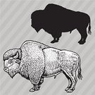 American Bison,Genus Bison,Vector,Ilustration,Animals In The Wild,Animal,Pen And Ink,Black And White,Arrangement,Multiple Image,Collection,Set,Mammal,Group Of Animals,Endangered Species