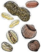 Peanut,Nut - Food,Doodle,Organic,Ilustration,Computer Graphic,Sketch,Art,Chestnut,Food,Drawing - Art Product,Group of Objects,Copy Space,Healthy Eating,Design Element,Pen And Marker,Ingredient,Clip Art,Snack,Food And Drink,Pistachio,Raw Food,Scribble,Nutrient