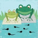 Tadpole,Frog,Young Animal,Offspring,Care,Nature,Lifestyle,Babies And Children,Animals And Pets,Family,Contemplation,Parent,Newborn Animal,Pond,Watch Out For