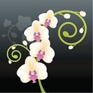 Orchid,Flower,Single Flower,Vine,Purple,White,Green Color,Floral Pattern,Single Object,Tropical Climate,Branch,Black Background,Plant,Concepts And Ideas,Flower Head,Botany,Time,Bud,Flowers,Beige,Copy Space,No People,Nature,Cream Coloured,Curled Up