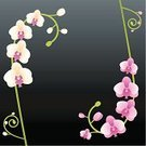 Orchid,Single Flower,Flower,Vine,Tropical Climate,Frame,Purple,Pink Color,Backgrounds,White,Branch,Computer Graphic,Floral Pattern,Bud,Flower Head,Plant,Growth,No People,Black Background,Flowers,Copy Space,Curled Up,Time,Square,Elegance,Concepts And Ideas,Nature