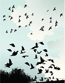 Bird,Flying,Silhouette,Migrating,Black Color,Cloud - Sky,Sky,Pigeon,Wire,Brewer's Blackbird,Branch,Group Of Animals,Illustrations And Vector Art,Birds,Vector Florals,Animals And Pets,Outdoors,Ilustration,Wing,Wing