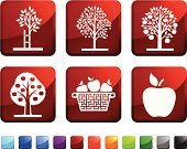 Apple Tree,Tree,Apple - Fruit,Computer Icon,Root,Basket,Fruit,Vector,Food,Red,Branch,Growth,Picking,Blue,Icon Set,Interface Icons,Ilustration,Leaf,Black Color,Label,White Background,Nature,Square,Square Shape,Green Color,No People,Dirt,Design,apple picking,apple basket