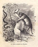 Snake,Ilustration,Eating,Animal,Killing,Alpaca,Carnivore,Fighting,Aggression,Survival,Paper,Food Chain,No People,Document,Group Of Animals,Small Group Of Animals,Reptiles,Gripping,Zoology,Sepia Toned,Old,Black Leopard,Mammal,Animals And Pets,Black And White,Obsolete,Mammals,Boa Constrictor,Physical Geography,Stained,Boa,Intricacy,Drawing - Art Product,Dirty,Death,Pencil Drawing,Reptile,Old-fashioned,Nature,Vertical,Antique,Wild Animals,Ephemera,Hoofed Mammal,Python