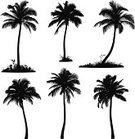 Palm Tree,Silhouette,Vector,Back Lit,Coconut Palm Tree,Ilustration,Plant,Cut Out,Leaf,Outline,Black And White,Isolated,Clip Art,Design Element,White Background,Nature,Illustrations And Vector Art