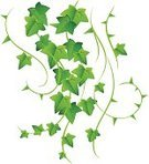 Ivy,Vine,Creeper Plant,Leaf,Green Color,Decoration,Twig,Ilustration,Frame,Stem,Herb,Branch,Decor,leafiness,Nature,Plant,Design Element,Arts And Entertainment,Illustrations And Vector Art,Growth,Part Of,Environment,Botany,Candid,Computer Graphic,Herbal Medicine,Backgrounds,botanic,Isolated,Ornate,Remote,Nature,foliagé,Symbol,Springtime,Freshness