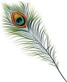Peacock,Feather,Vector,Nature,Single Object,Animal,Vitality,Shiny,Isolated,Elegance,Ilustration,Image,Color Image,Beauty In Nature,Bright,Beautiful,Vibrant Color,Eps10,Macro,Close-up,Multi Colored,Birds,Illustrations And Vector Art,Isolated Objects,Fluffy,Animals And Pets,Iridescent