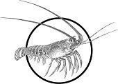 Lobster,Crayfish,Shrimp,Sea,Isolated,Tail,Animals In The Wild,Image,Underwater,Prawn,Life,Wild Animals,Animals And Pets,Nature,Seafood,Animal,Computer Graphic,Vector,Food,Illustrations And Vector Art,Sea Life,Group of Objects,Painted Image,White,Large,Ilustration,Gourmet,Sharp